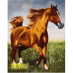 تابلو فرش اسب عرب کد 11536